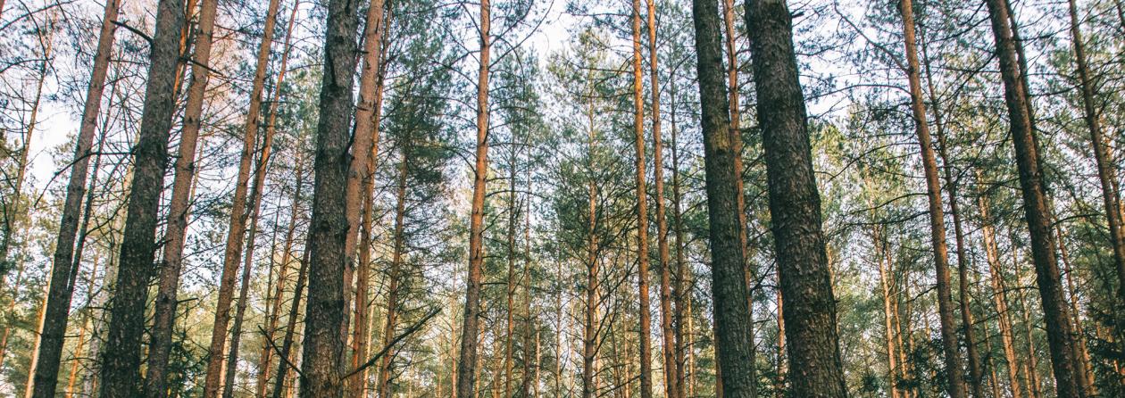 Metsäkuva blogiin