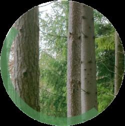 pine-circle